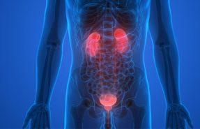 Prostat Oluşumu ve Mesane Kanseri